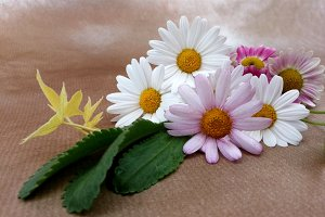 Small bouquet of daisies