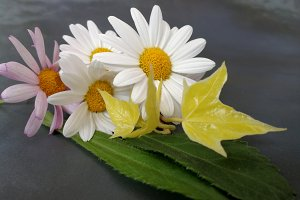 Small boquets of daisies