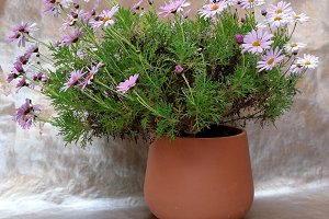 Clay pot with pinf daisies