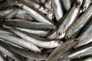 Fresh anchovies at market