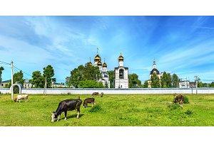 Cattle in pasture at St. Nicholas Monastery in Pereslavl-Zalessky - Yaroslavl Region, Russia