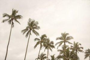 coconut tree at tropical coast
