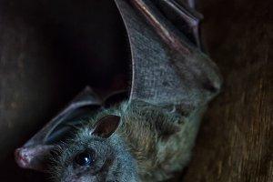 Close-up of a black bat