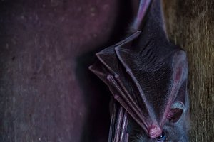 Close-up of a black bat