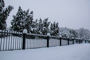 Fence blizzard in park white trees landscape