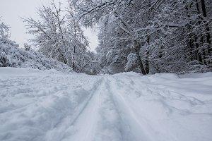 Blizzard in park white trees landscape