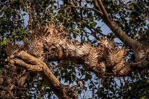 dry leaves on a tree
