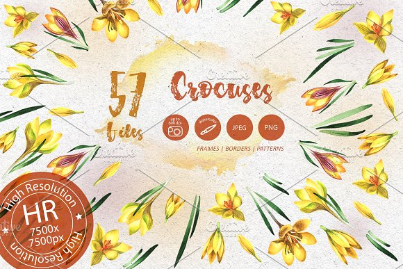 Yellow Crocuses PNG Watercolor Set