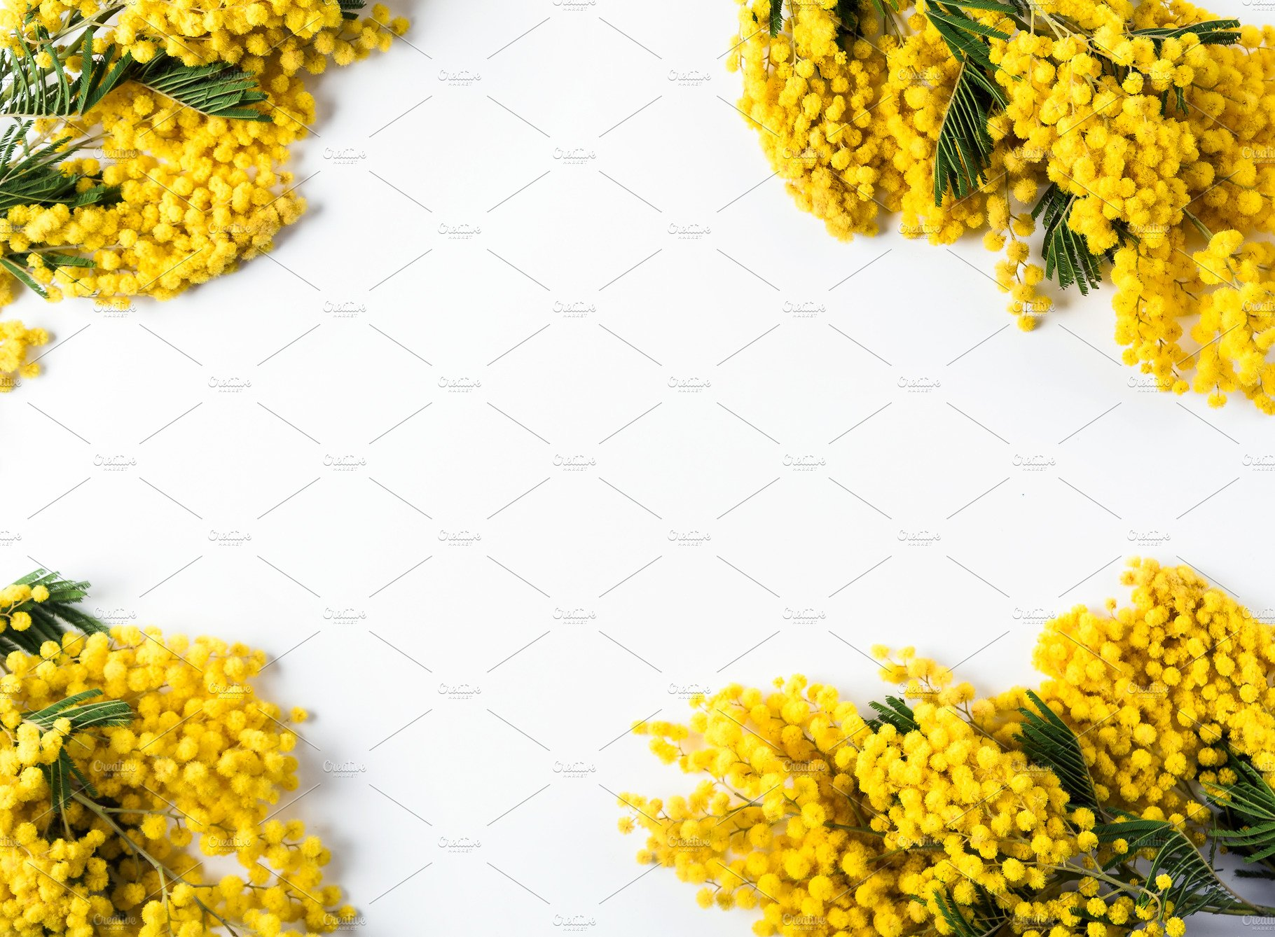 Background Of Yellow Mimosa The Sym Food Images Creative Market