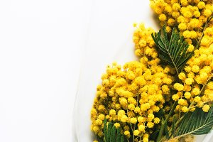 Yellow Mimosa bouquet on white backg