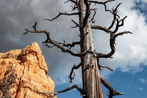 An Old Tree In Stone Desert
