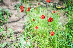 Spring flowers in a garden
