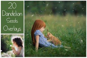 20 Dandelion Seeds PNG Overlays