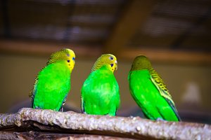 beautiful yellow-green parrot