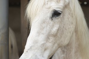 Face of a horse in a shelter