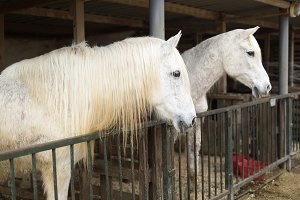 Two horses in a shelter in Rojales