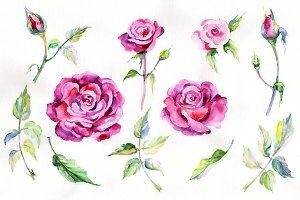 Wildflower pink rosa PNG set