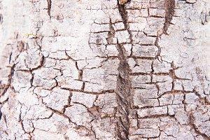 Rind , Tree bark