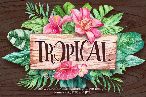Tropical Watercolor Illustrations