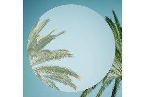 palm tree in sky