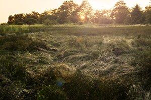 Salt Meadow at Sunset