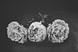 Black and White Peonies