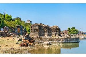 Cows at Lakulish Temple and Chhashiyu Lake - Pavagadh Hill in Gujarat, India