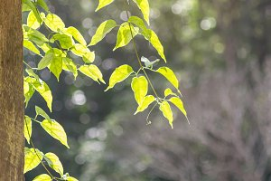 natural green leaves with soft light