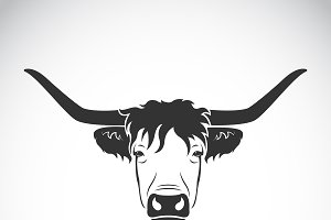Vector of highland cattle cow head.