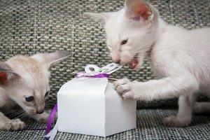 Tasty gift