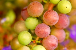 A bunch of colourful grapes