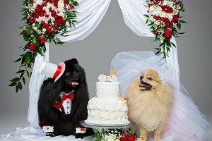 dog wedding couple under flower arch