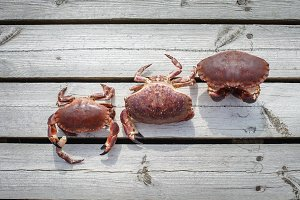 three alive crabs standing on wooden floor