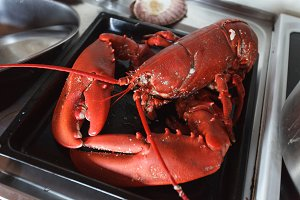 freshly cooked lobster lying on baking tray