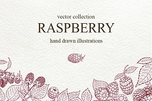 Raspberry Vector Collection