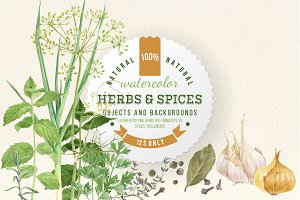 Herbs and spices watercolors