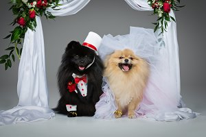 dog wedding couple under flower arch