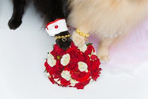 dog wedding couple paws on bouquet