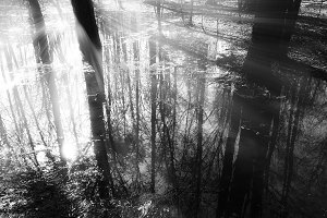 Dramatic light rays at forest river landscape background