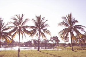 The coconut palm in the park summer