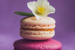 French macarons with white flowers
