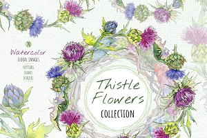 Thistle flowers collection PNG set