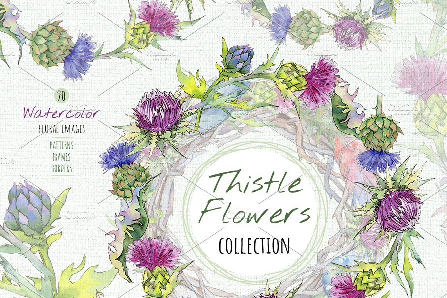 d88e01b33 Thistle flowers collection PNG set ~ Illustrations ~ Creative Market