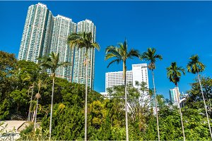 Palm trees in Kowloon Park of Hong Kong