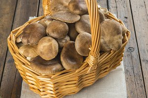 Basket with wild oyster mushrooms
