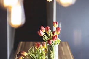 Tulips on Table with Lights