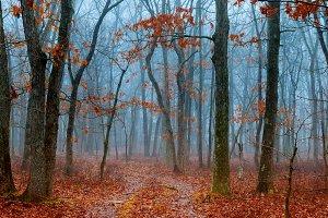 horror scene of a dark forest
