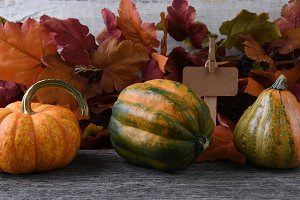 Autumn Farm Stand with gourds