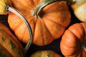 Pumpkins, Squash and Gourd
