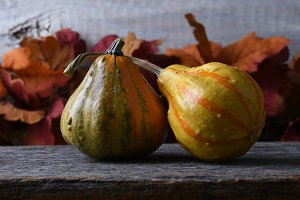 Autumn Still Life with two gourds